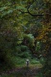 Szczęśliwy pies w lesie Obrazy Royalty Free