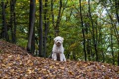 Szczęśliwy pies w lesie Zdjęcia Stock