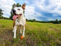 Szczęśliwy pies w miasto parku Zdjęcie Royalty Free