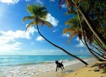 Szczęśliwy pies w raju zdjęcie stock