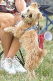 Szczęśliwy pies z właścicielem przy parkiem obraz royalty free