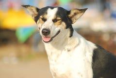 Szczęśliwy Przybłąkany pies Obraz Stock