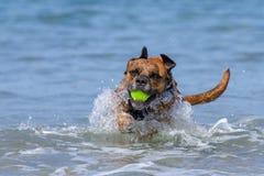 Szczęśliwy psa bawić się przynosi na nadmorski piaskowatej plaży obrazy royalty free