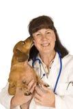 Szczęśliwy psi oblizanie kobiety weterynarz Zdjęcia Royalty Free