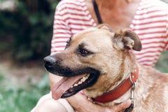 Szczęśliwy psi portait, kobieta ściska ślicznego kundla psa outdoors, duży Obrazy Royalty Free