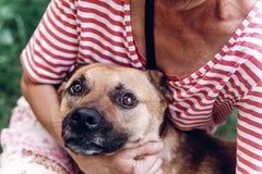 Szczęśliwy psi portait, kobieta ściska ślicznego kundla psa outdoors, duży Fotografia Stock