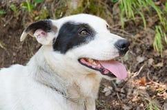 Szczęśliwy psi spojrzenie coś Zdjęcia Royalty Free