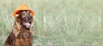 Szczęśliwy psi sztandar obrazy stock