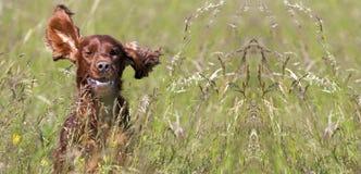 Szczęśliwy psi sztandar Zdjęcia Royalty Free