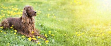 Szczęśliwy psi sztandar fotografia stock