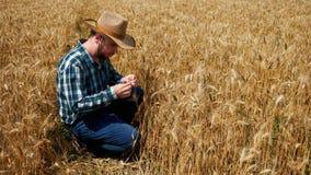 Szcz??liwy rolnik analizuje jego zbo?owa plantacja zbiory