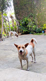 Szczęśliwy uśmiechnięty pies fotografia stock