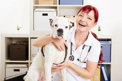 Szczęśliwy weterynarz z psem Obraz Royalty Free