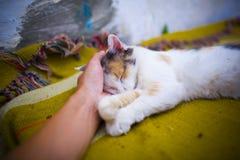 Szczęśliwy wioska kot zadawalają z ręki uderzaniem Fotografia Stock