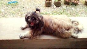 szczęśliwy zwierzę domowe Zdjęcia Royalty Free