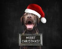 Szczęśliwych Świąt Bożego Narodzenia są prześladowanym z Santa kapeluszem życzyć wam wesoło boże narodzenia zdjęcie stock
