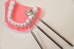 Szczęka model i stomatologiczny narzędzie set zdjęcie stock