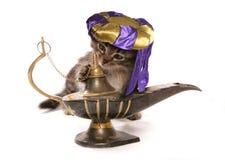 Szczęsliwy życzenie kot Obrazy Stock