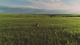 szcz??liwego dziecka Rolnictwo, uprawia ziemi? poj?cie zbiory wideo