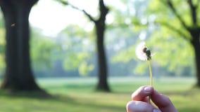 Szcz??liwy dandelion dmuchanie w parku podczas wiosny zdjęcie wideo