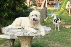 Szcz??liwy pies w ogr?dzie zdjęcie stock