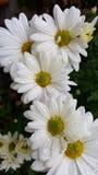 Szczęsliwy uroczy Flower power Obrazy Royalty Free