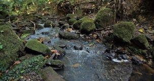 Szczebiotliwy strumyk w lesie zdjęcia royalty free