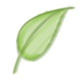 szczecina muśnięcia liść Fotografia Stock
