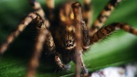 Szczegółowy pająk Przygląda się makro- obraz royalty free