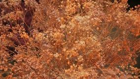 szczegółowy rysunek kwiecisty pochodzenie wektora Udział sztuczni kwiaty zdjęcie wideo