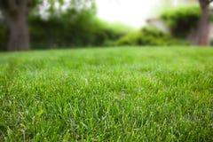 Szczegół łąka Obraz Royalty Free