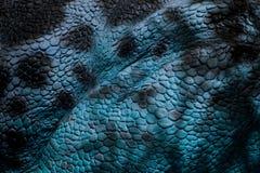 Szczegół błękitna skóra gad obrazy royalty free