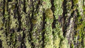 Szczegół barkentyna żlobił czasem, rośliną i narysami na barkentynie z mech powodować czasem, stare parkowe tekstury zbiory