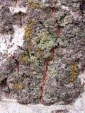 Szczegół barkentyna żlobił czasem, roślina stary park Tekstury i narysy na barkentynie powodować czasem fotografia stock