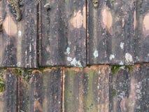 Szczegół brudne stare glin płytki z mech zdjęcia stock