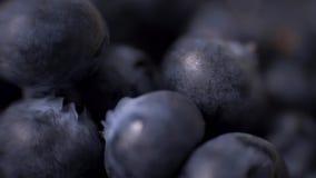 Szczegół czarne jagody Makro- przewozi samochodem strzał 4K postanowienia odgórny widok zdjęcie wideo