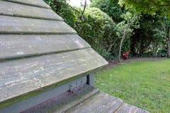 Szczegół dom robić, szalunek budujący kurczaka wyczyn, pokazywać z niektóre odległymi kurczakami i cockeral w intymnym ogródzie Fotografia Stock