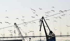 Szczegół dwa żuraw z ptakami Zdjęcie Stock