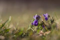 Szczegół fiołkowy kwiat obraz stock