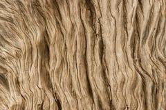 Szczegół gnarled drzewo Obrazy Royalty Free