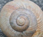 Szczegół konchy ślimaczka Helix pomatia Wyraźnie widoczna skorupy struktura zdjęcie royalty free