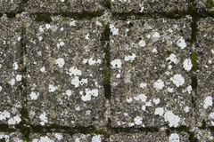 Szczegół liszaj i mech na antycznej brukującej ulicie Zdjęcia Stock