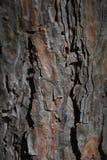 Szczegół mech i liszaj zakrywał drzewną barkentynę zdjęcia royalty free