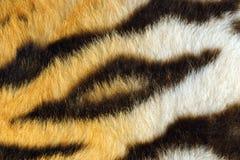 Szczegół piękni czarni lampasy na tygrysie obrzuca obrazy royalty free