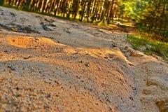 Szczegół piaskowata ścieżka w sosnowym lesie wcześnie w wieczór blisko wioski Hradcany w regionu turystycznego Machuv kraju w cze Zdjęcie Stock