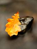 Szczegół przegniły stary dębowy liść na bazalta kamieniu w zamazanej wodzie obraz stock