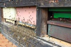 Szczegół pszczoła rój zdjęcia royalty free
