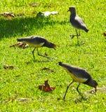 Szczegół ptaki obrazy royalty free