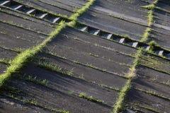 Szczegół, skład z liniami, betonowa postawa i natura, trawa fotografia stock