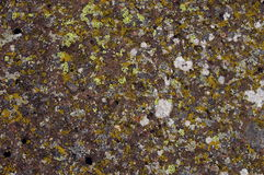 Szczegół skała Zdjęcie Stock
